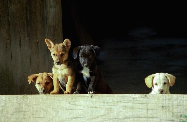 Grupa szczeniaków